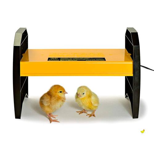 Criadora de pollos para Gallinas