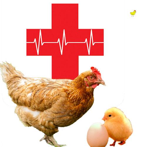 Salud de tus gallinas