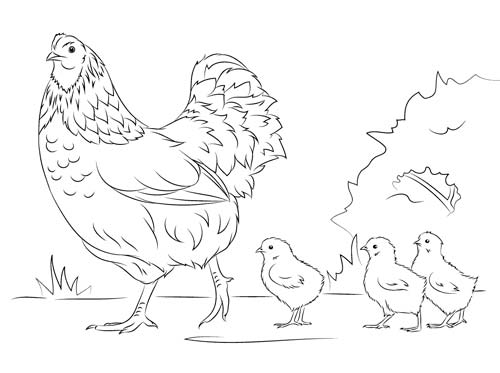 Gallina con polluelos